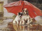 История со щенками (без цензуры)