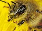 Пчелки и пчелководы