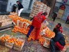 Апельсиновые бои