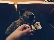Это я скриплю по ночам качелей