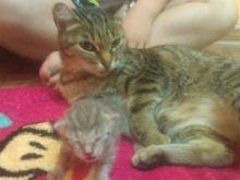 Кошачья жизнь с человеческим лицом