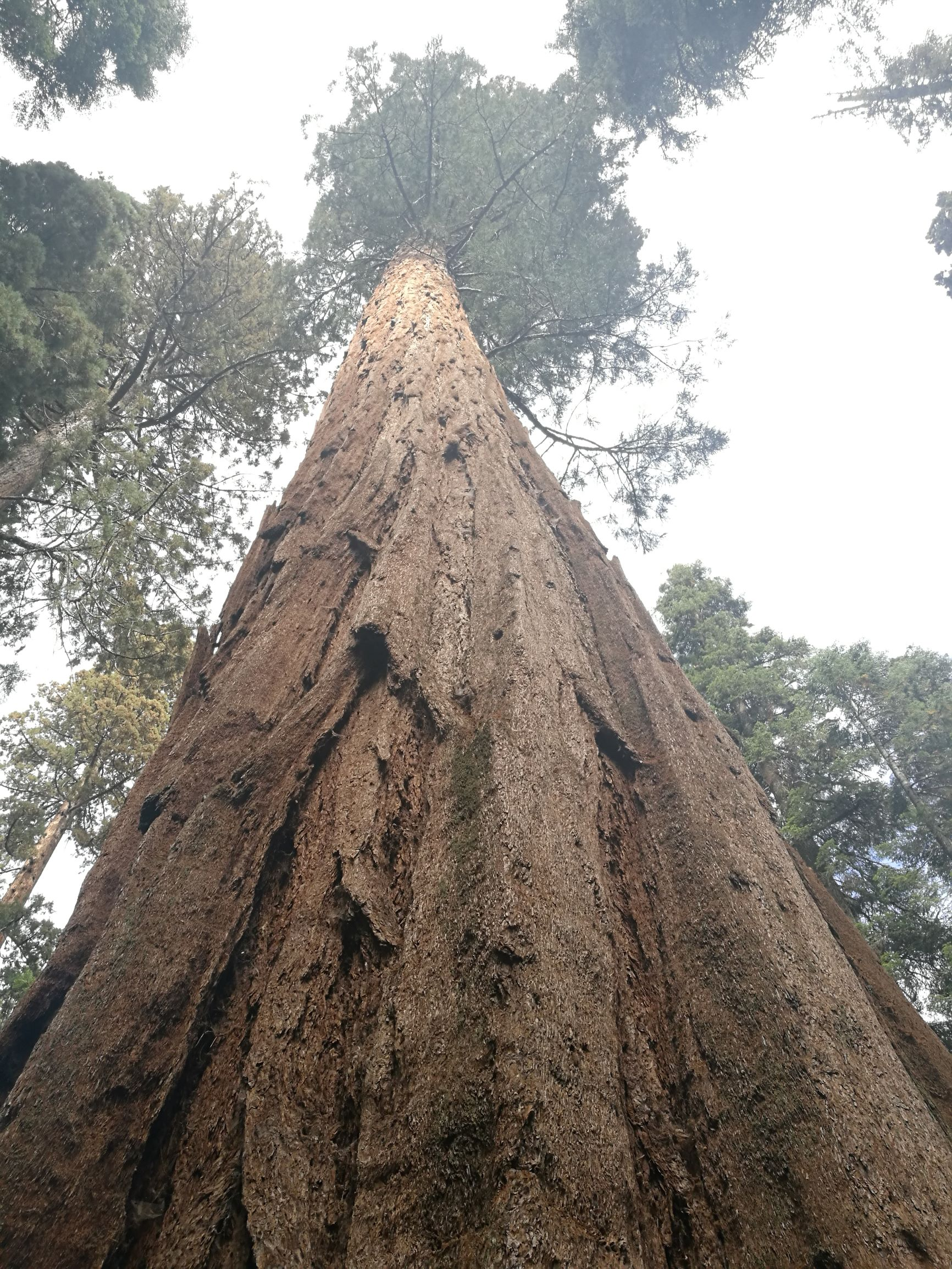 Национальный парк «Секвойя». Фоторепортаж