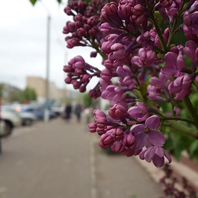 Весна в Балшықсити
