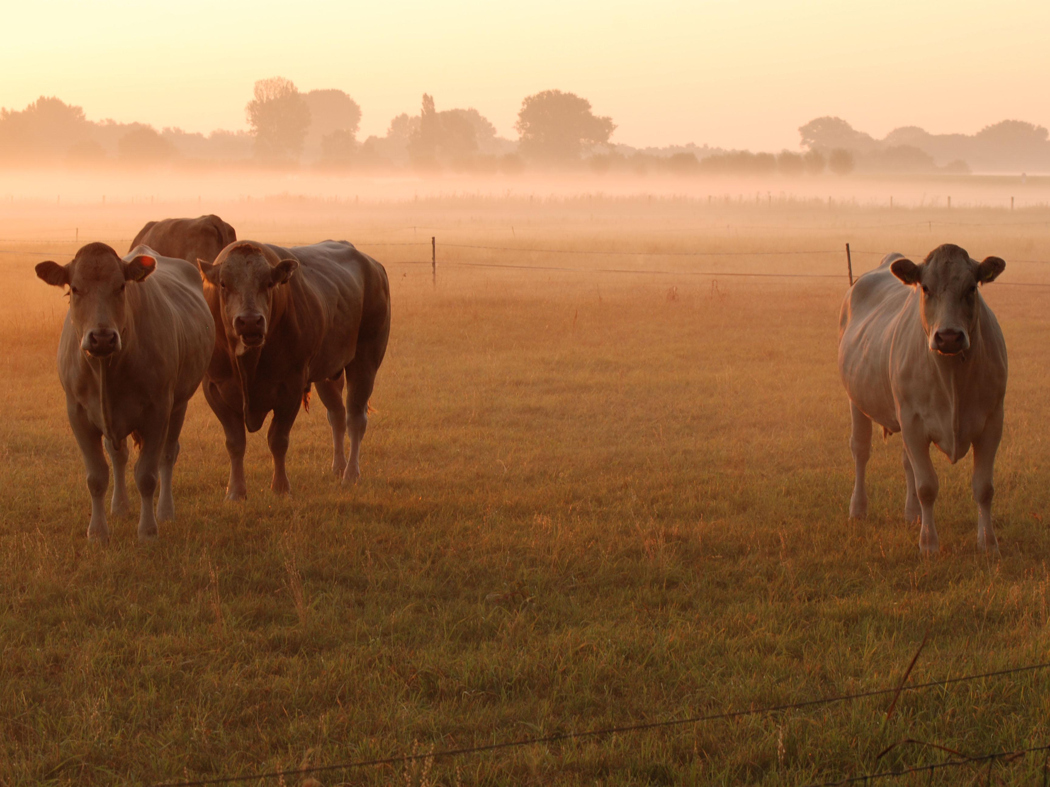 Утро туманное