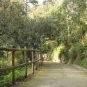 Дорожки в ботаническом саду