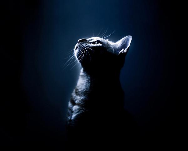 Сумеречная кошка