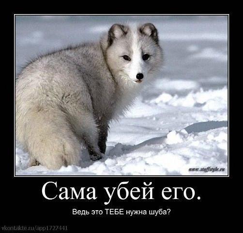Отзывы о webeffector ru