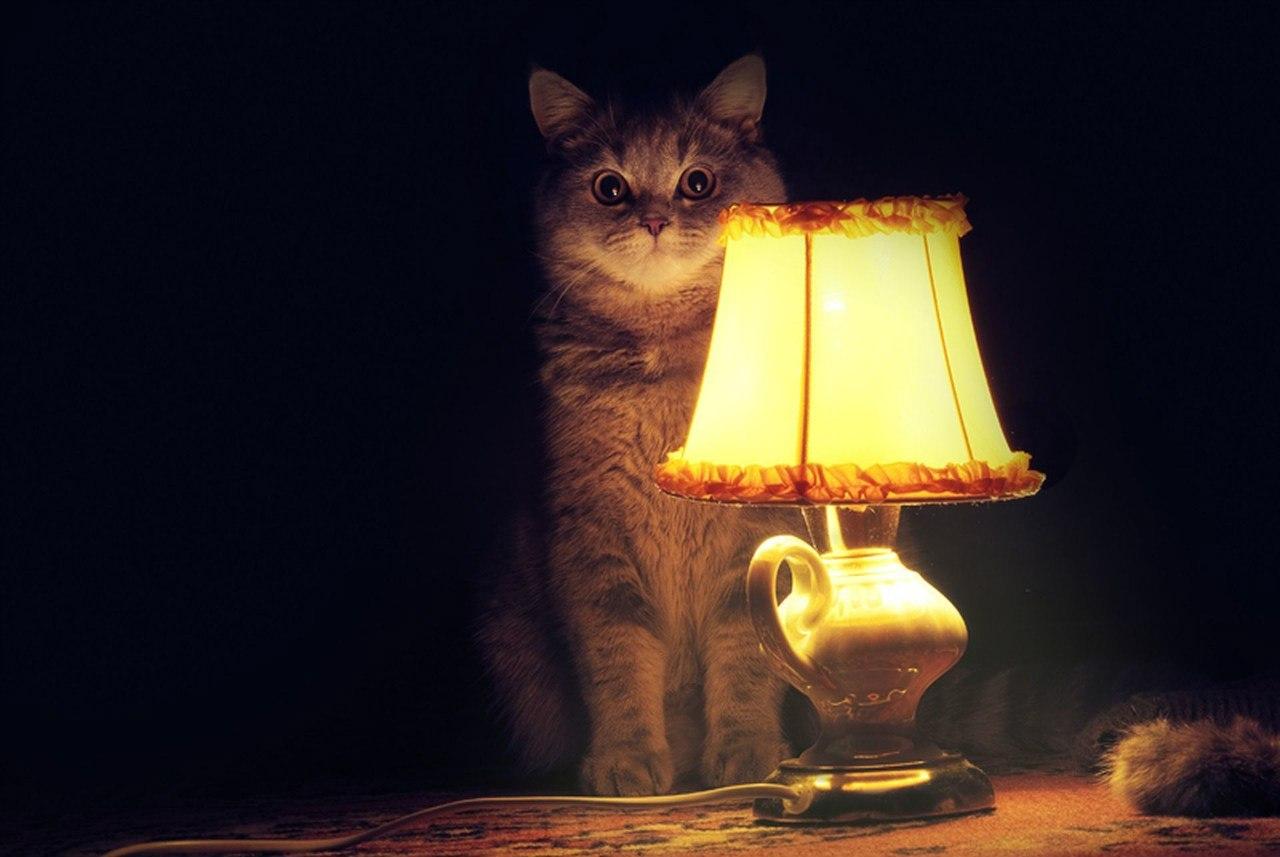Пришел поменять лампочку и трахнул 10 фотография