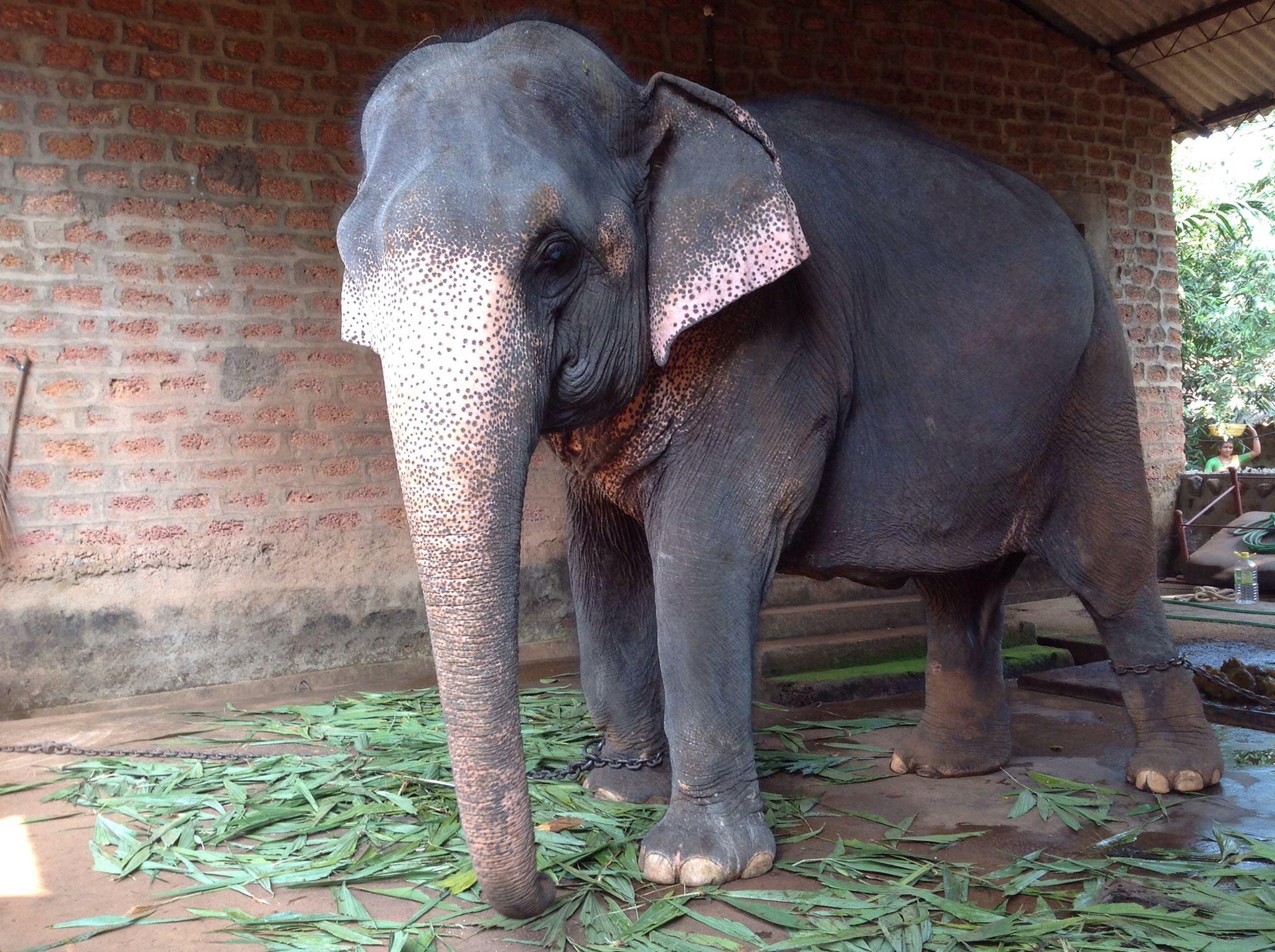 नमस्ते! Записки из хижины-4. Elefants