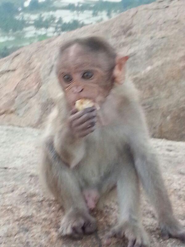 नमस्ते! Записки из хижины-12. Planet of the Monkeys