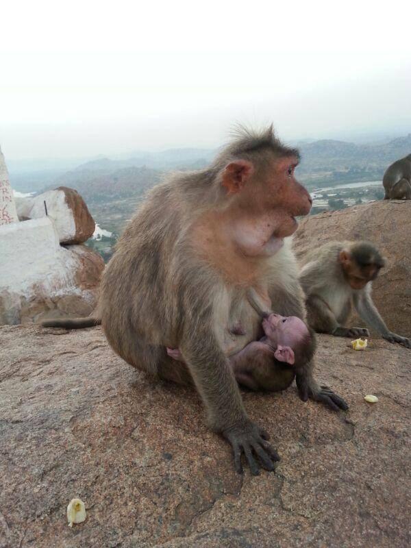 नमस्ते! ������� �� ������-12. Planet of the Monkeys