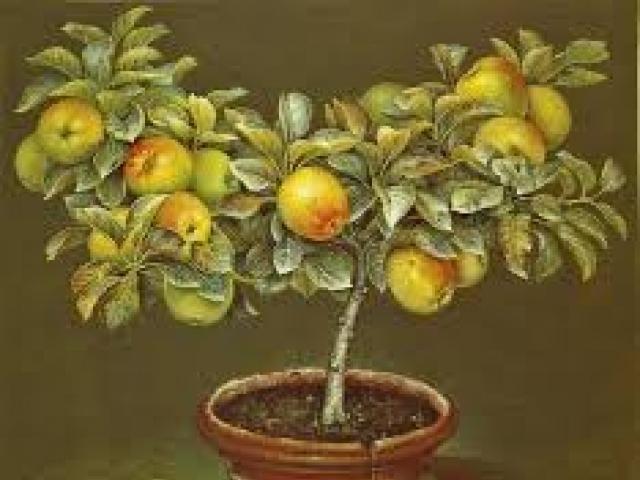 У детства яблоневый аромат