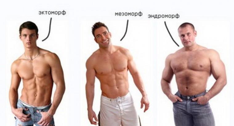 Эктоморф, энергичный, худой, быстрый. Три типа телосложения: эктоморф
