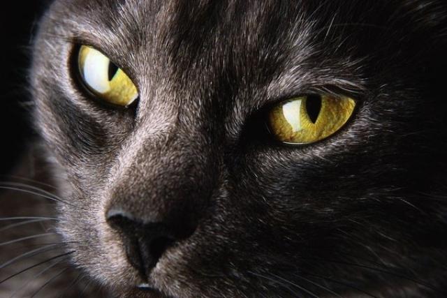 Английские приметы о кошках
