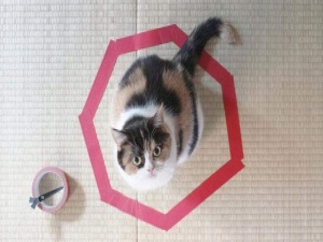 Как поймать кота вловушку