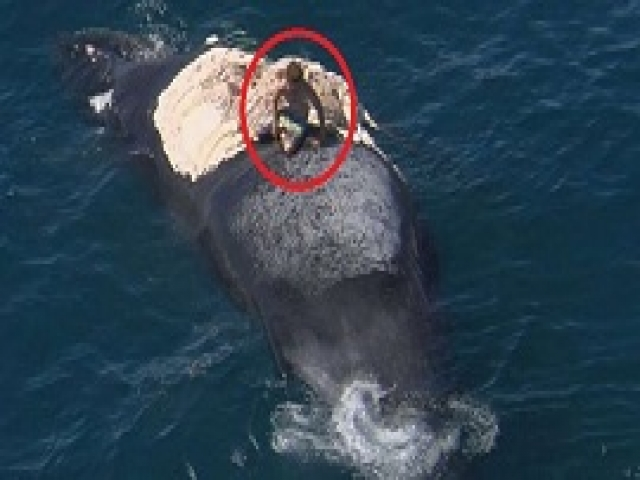 Этот австралиец решил залезть на тело мертвого кита. Но у акул были другие планы...
