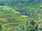 Памятка туристам Emperum, отдыхающим на Бали