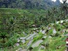 Великолепие рисовых террас Бали – визит к сердцу острова для туристов Arrow Hotels and Resorts