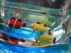 Обзор мини аквариум usb hub