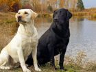 Не все собаки умеют плавать «по-собачьи»