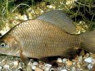 Небольшие рыболовные секреты