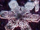 Снежинки под микроскопом (часть 2)