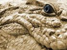 Покраска крокодила в домашних условиях