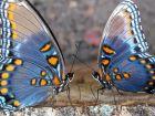 Бабочки и чудеса чудесные.