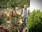 В Актау цветут розы