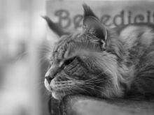 Записки Сумасшедшего: Цвет настроения серый