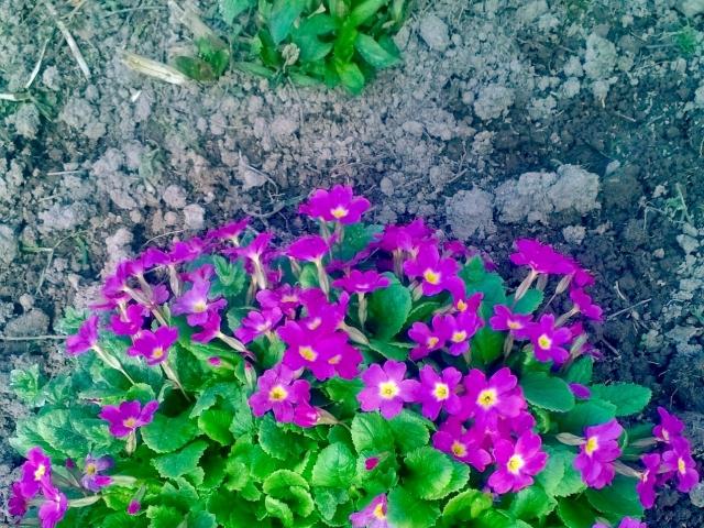 Весна пришла ура!