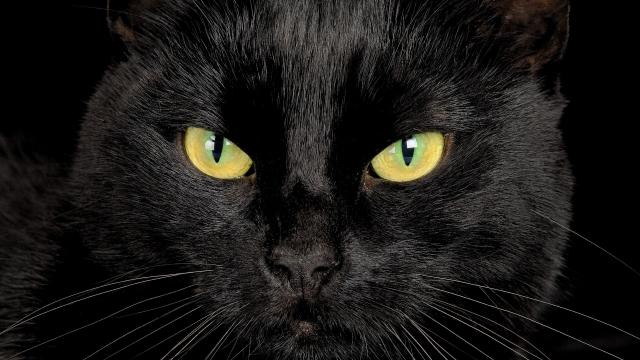 """Айтыс: """"Лейся песня"""". Ми. Чёрный кот"""