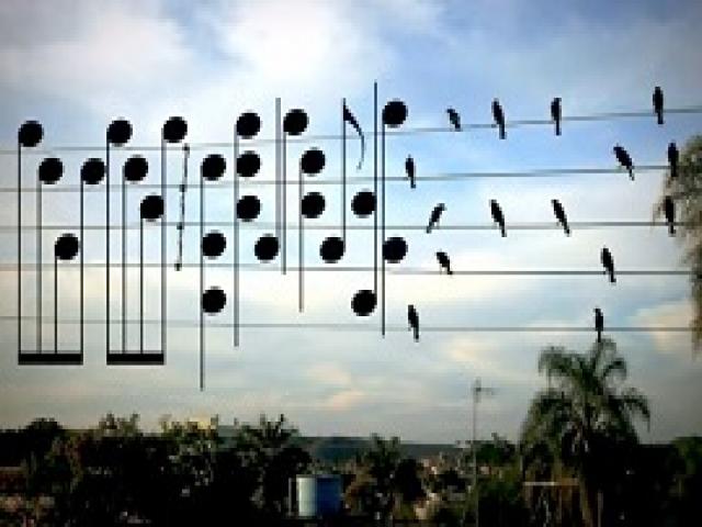 Мужчина сделал обычное фото птиц на проводах и превратил его в музыкальную композицию. Потрясающе!