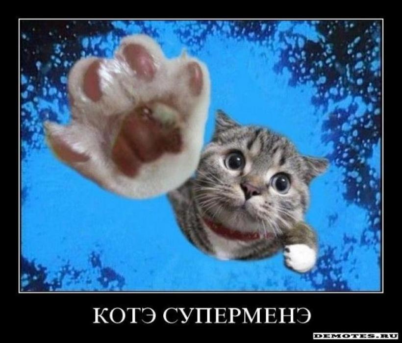 Кошачья выставка в Думане 19-20 ноября
