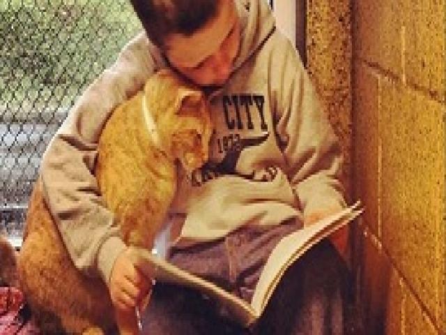 Приют для животных привлекает детей читать для бездомных кошек. Отличная идея!