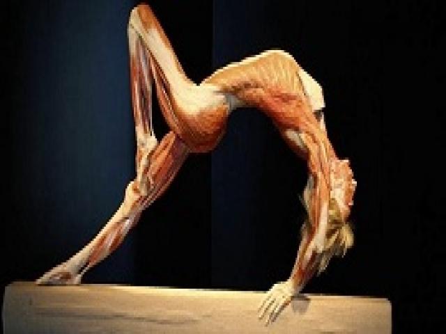 То, о чём не рассказывали тебе на уроках анатомии. 33 невероятных секрета человеческого организма.