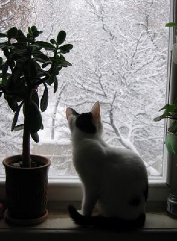 Весна, март и, конечно, кошки