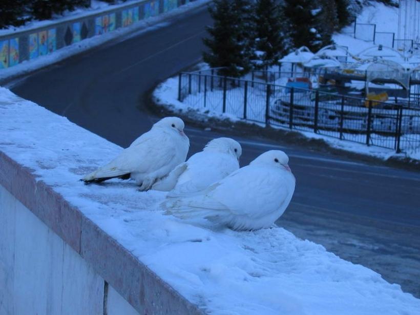 Последний зимний