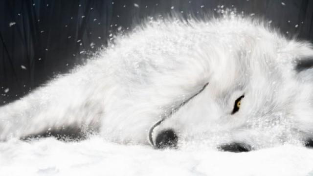 Почему Седой волк?