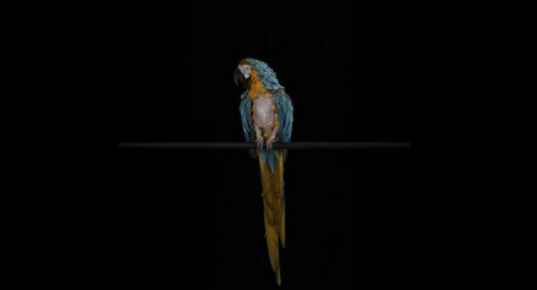Флешмоб. Пост от имени попугая
