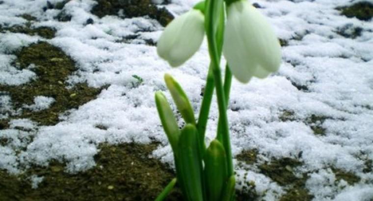Где ты, Весна?