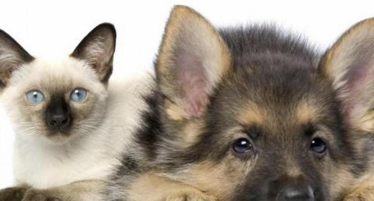 Cats and Dogs - Кошки и собаки