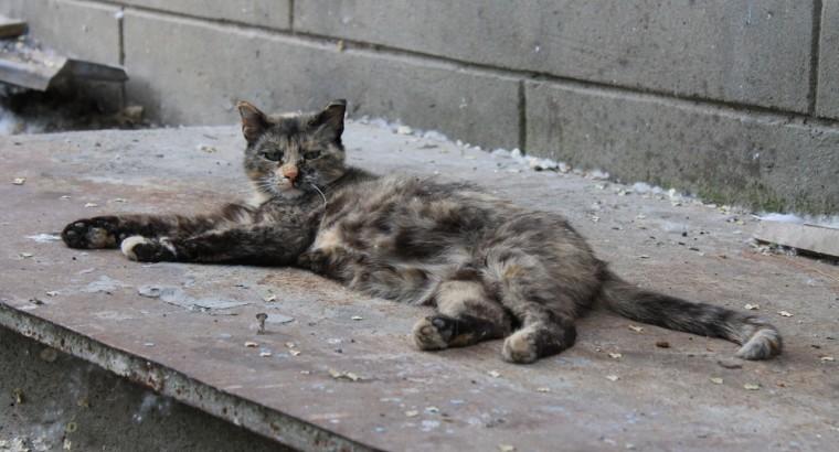 Волгоградская кошка