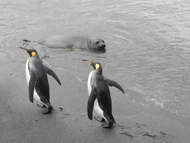 Как я провёл лето в Антарктике