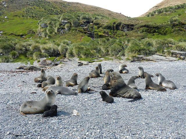 Как я провёл лето в Антарктике. Часть 4