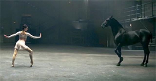 Картинки по запросу Эта лошадь танцует не хуже балерины!