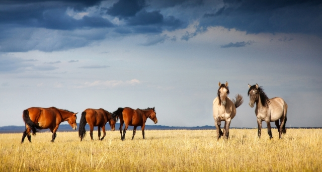 Экотуризм в трех Национальных парках страны